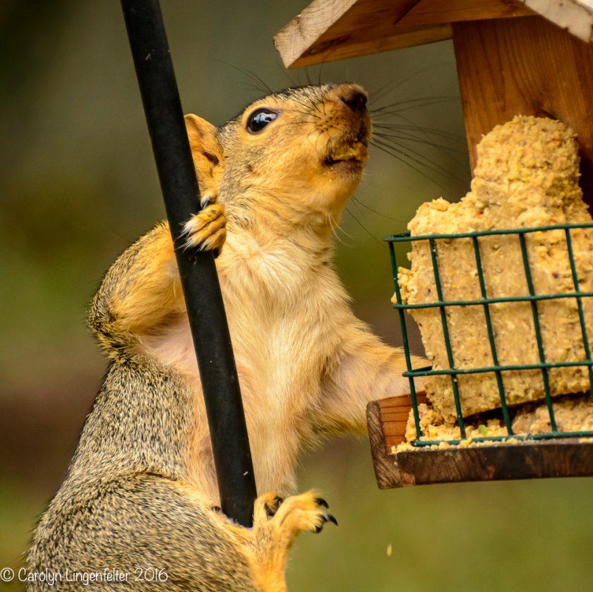 2016_08_16_backyard birding_back yard buffet_0047