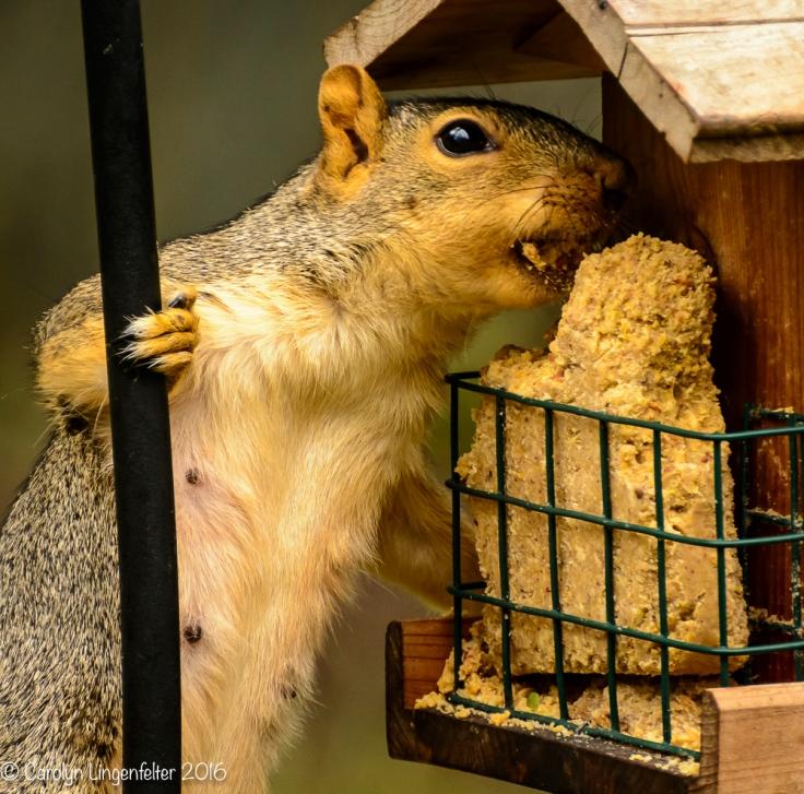 2016_08_16_backyard birding_back yard buffet_0049