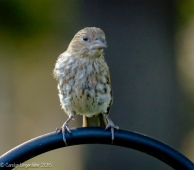 A different finch