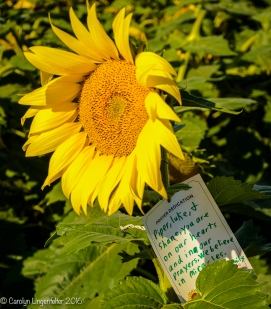 2016_09_13_road-trips_sunflowers_0016