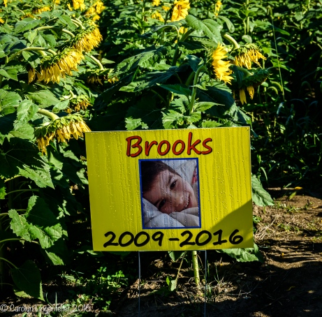 2016_09_13_road-trips_sunflowers_0017