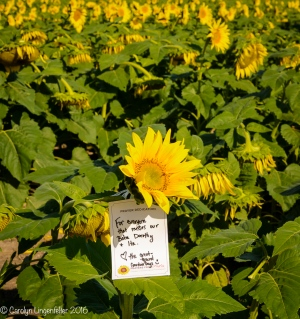 2016_09_13_road-trips_sunflowers_0046