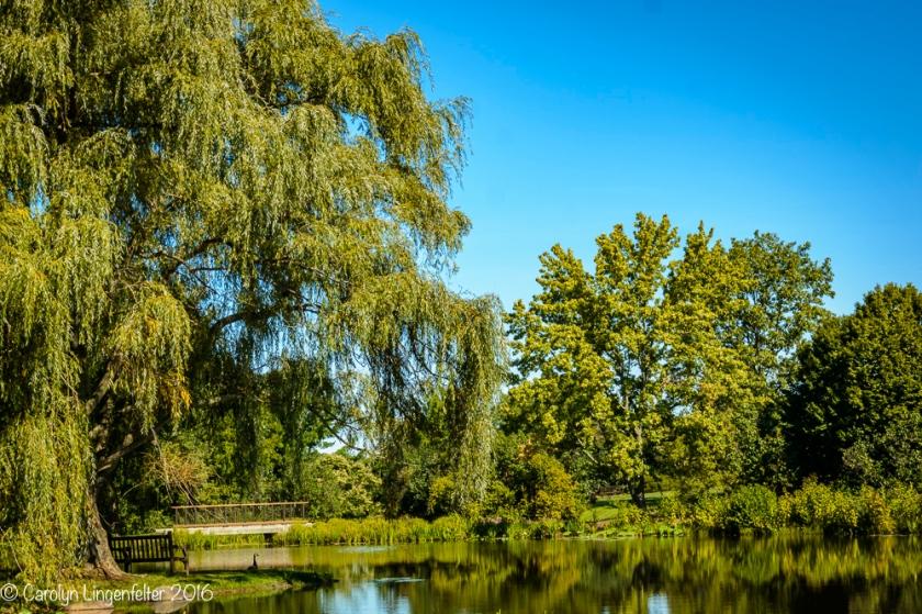 2016_09_16_trailwalk_holden-arboretum_0003