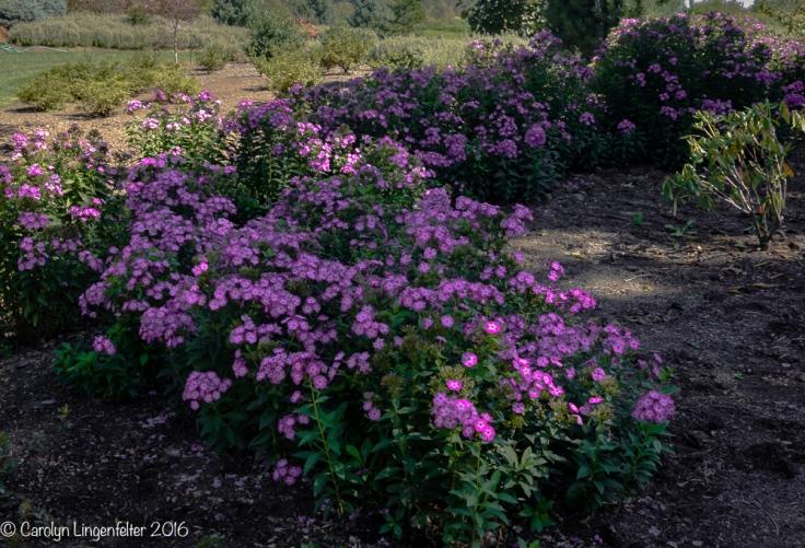 2016_09_16_trailwalk_holden-arboretum_0022