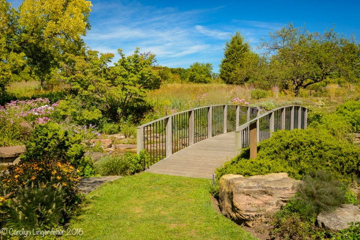 2016_09_16_trailwalk_holden-arboretum_0025-edit-edit