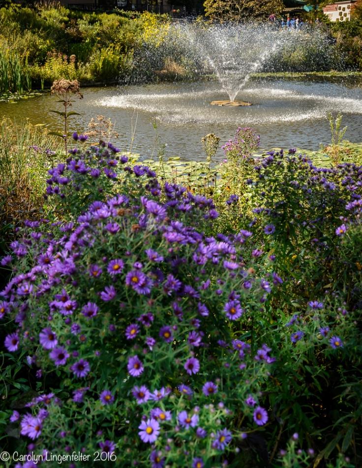 2016_09_22_places_holden-arboretum_0053