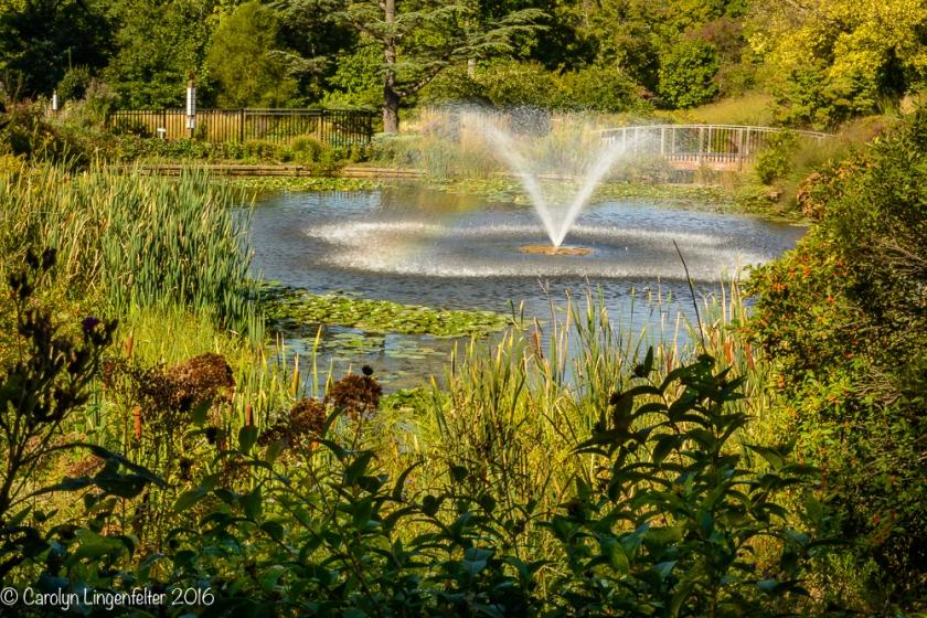 2016_09_22_places_holden-arboretum_0061