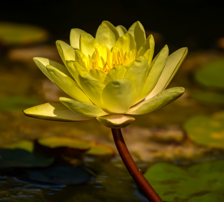 Another from the lily pond.