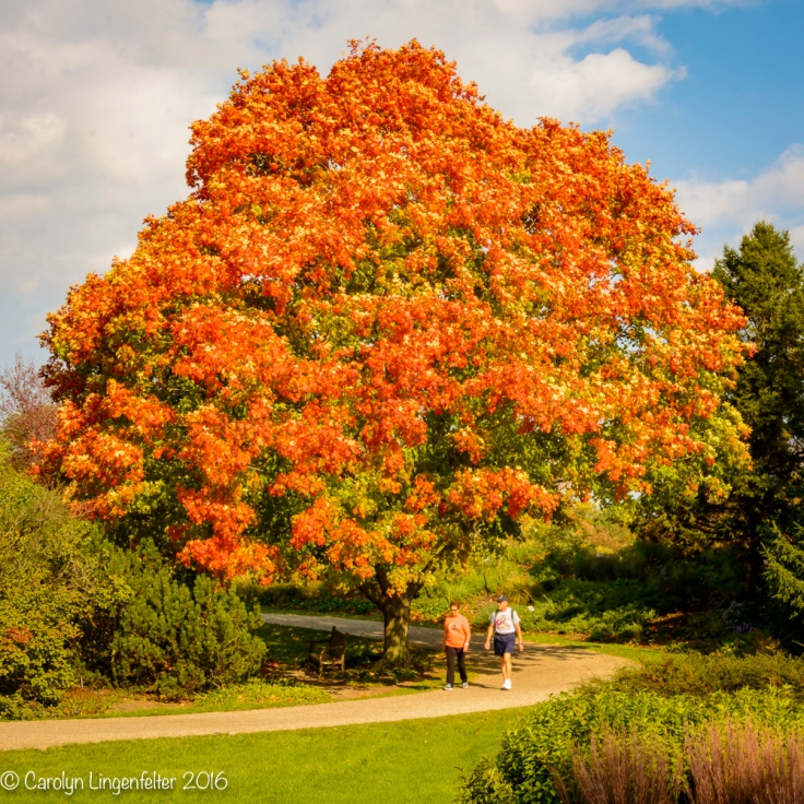 2016_10_18_places_holden-arboretum_0005-edit