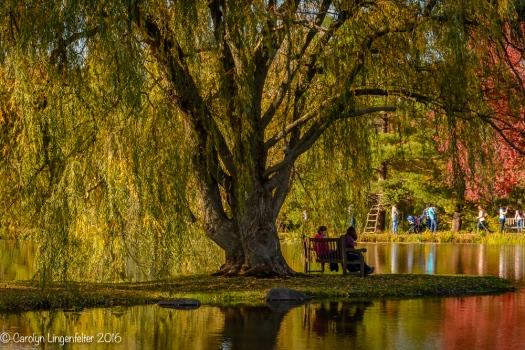 2016_10_23_places_holden-arboretum_0027
