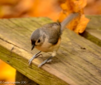 The titmouse again
