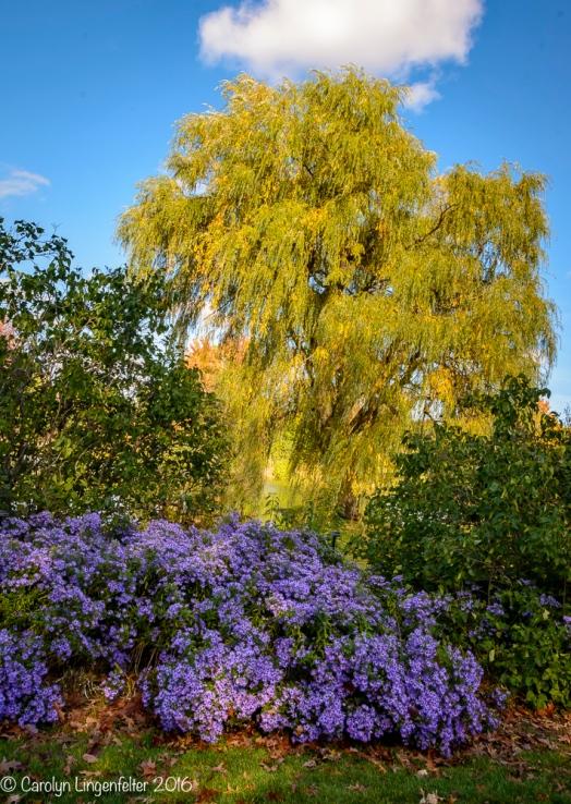 2016_10_28_places_holden-arboretum_0052