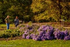 2016_10_28_places_holden-arboretum_0057