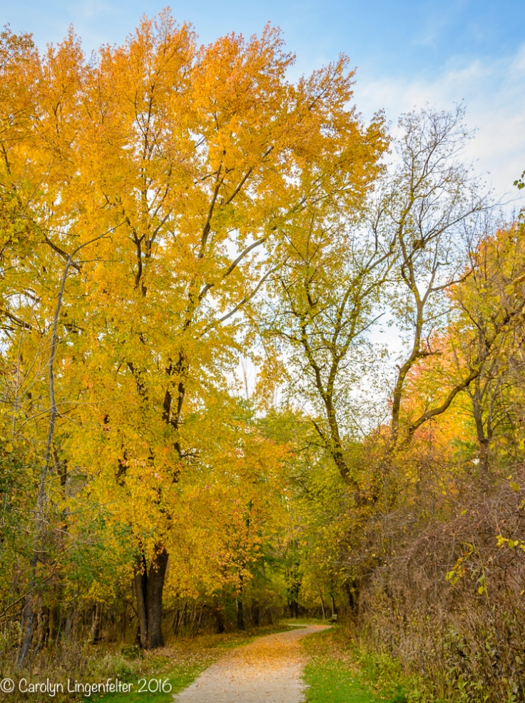 2016_11_02_places_chagrin-river-park_0008
