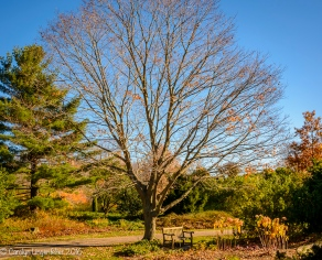 Since my last visit, the sugar maple has changed dramatically!