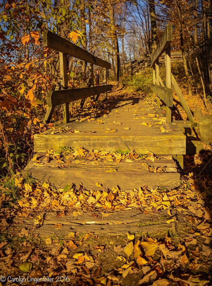 2016_11_07_places_holden-arboretum_0083