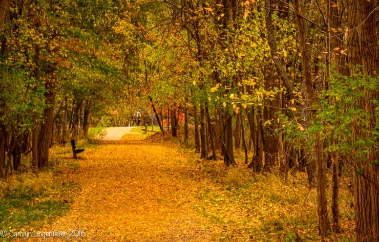 2016_11_09_places_chagrin-river-park_0002
