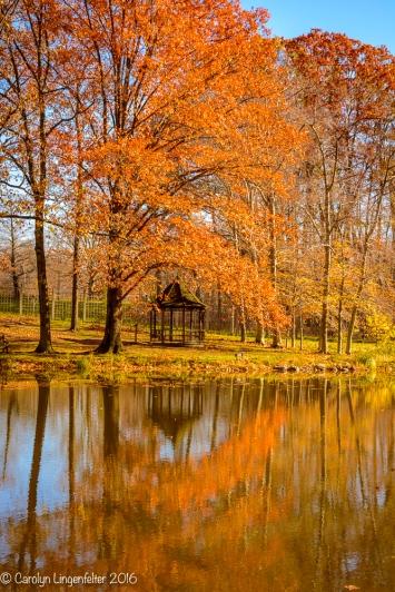 2016_11_10_places_holden-arboretum_0085
