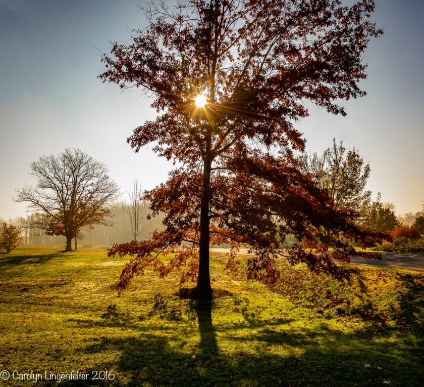 2016_11_17_places_holden-arboretum_0001-edit