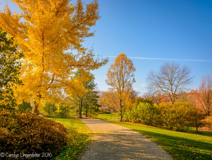2016_11_17_places_holden-arboretum_0010