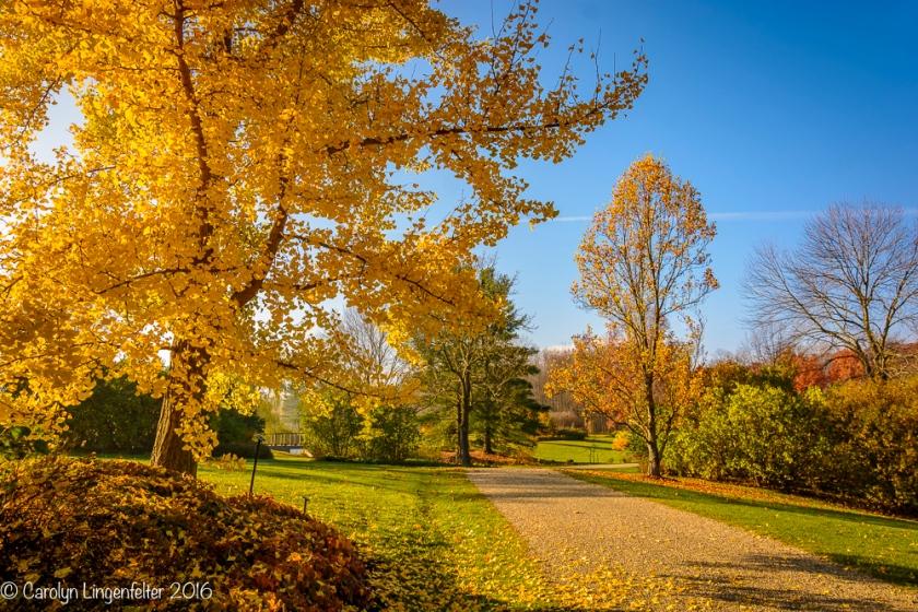 2016_11_17_places_holden-arboretum_0012