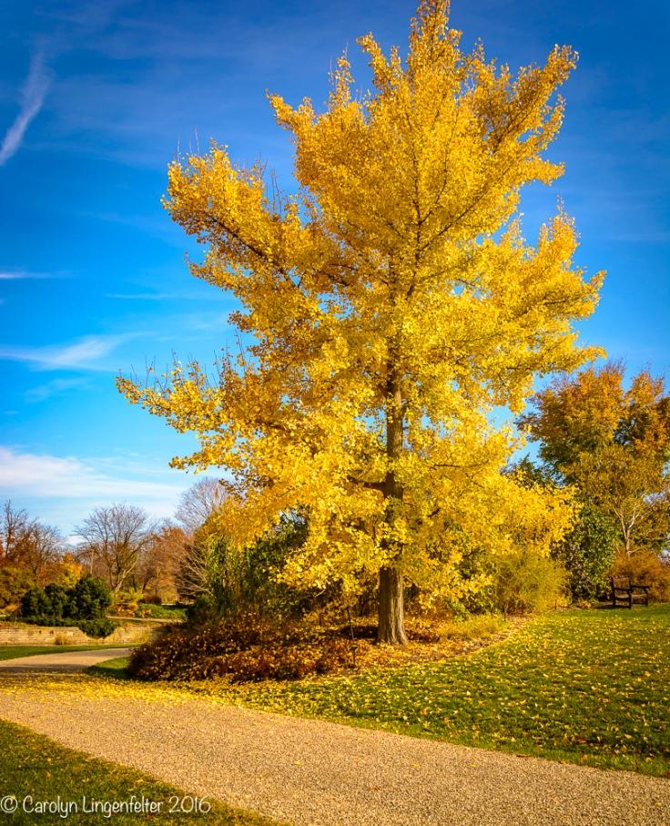 2016_11_17_places_holden-arboretum_0175