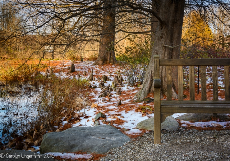 2016_11_22_places_holden-arboretum_0047-edit