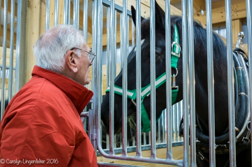 Bob conversing with a percheron