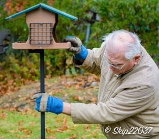 2016_11_26_places_back-yard-birding_0009