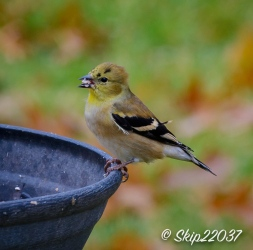 2016_11_26_places_back-yard-birding_0027