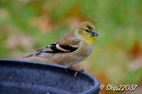 2016_11_26_places_back-yard-birding_0029