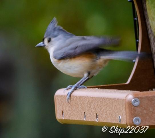 2016_11_26_places_back-yard-birding_0041