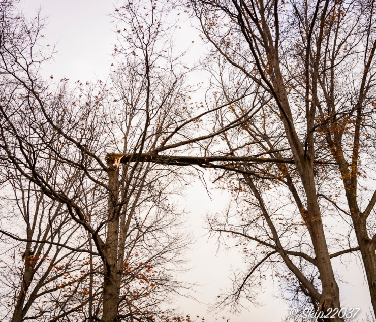 2016_12_01_places_back-yard-birding_0001