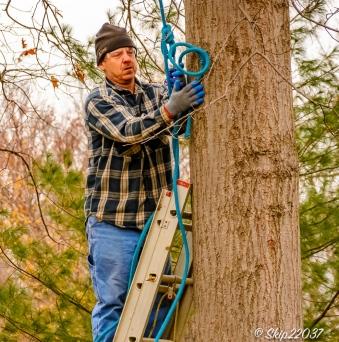2016_12_03_backyard-birding_taking-down-the-tree_0009-edit