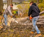 2016_12_03_backyard-birding_taking-down-the-tree_0020-edit