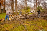 2016_12_03_backyard-birding_taking-down-the-tree_0024-edit