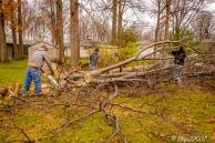 2016_12_03_backyard-birding_taking-down-the-tree_0024-edit