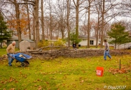 2016_12_03_backyard-birding_taking-down-the-tree_0034-edit