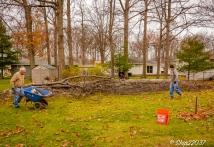 2016_12_03_backyard-birding_taking-down-the-tree_0034-edit