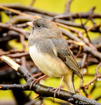 2016_12_06_backyard-birding_back-yard-buffet_0028