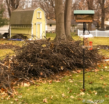 2016_12_06_backyard-buffet_taking-down-the-tree_0004-edit