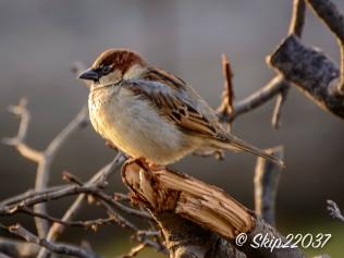 2016_12_07_back-yard-birding_003
