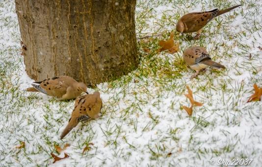 2016_12_08_back-yard-birding_009