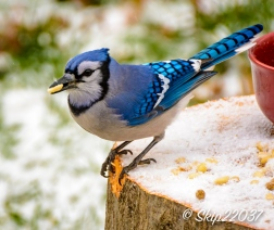 2016_12_08_back-yard-birding_022