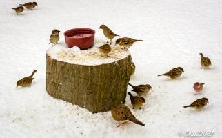 2016_12_09_backyard-birding_snowy-day_0044