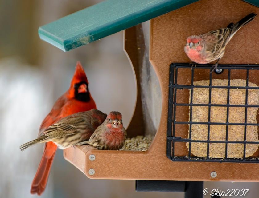 2016_12_15_places_back-yard-birding_0026