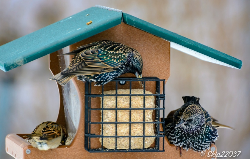 2016_12_15_places_back-yard-birding_0031