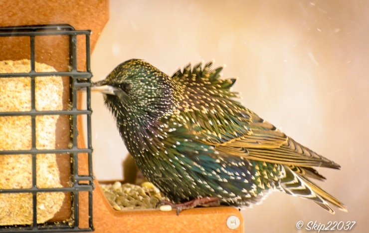 2016_12_15_places_back-yard-birding_0085