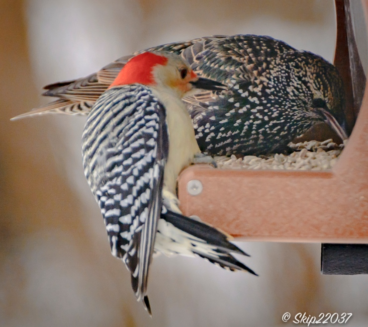 2016_12_16_places_back-yard-birding_0072