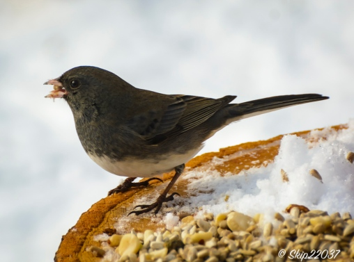 2016_12_19_places_back-yard-birding_0042